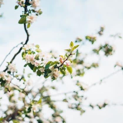Yin Yoga und Klang Frühlingserwachen